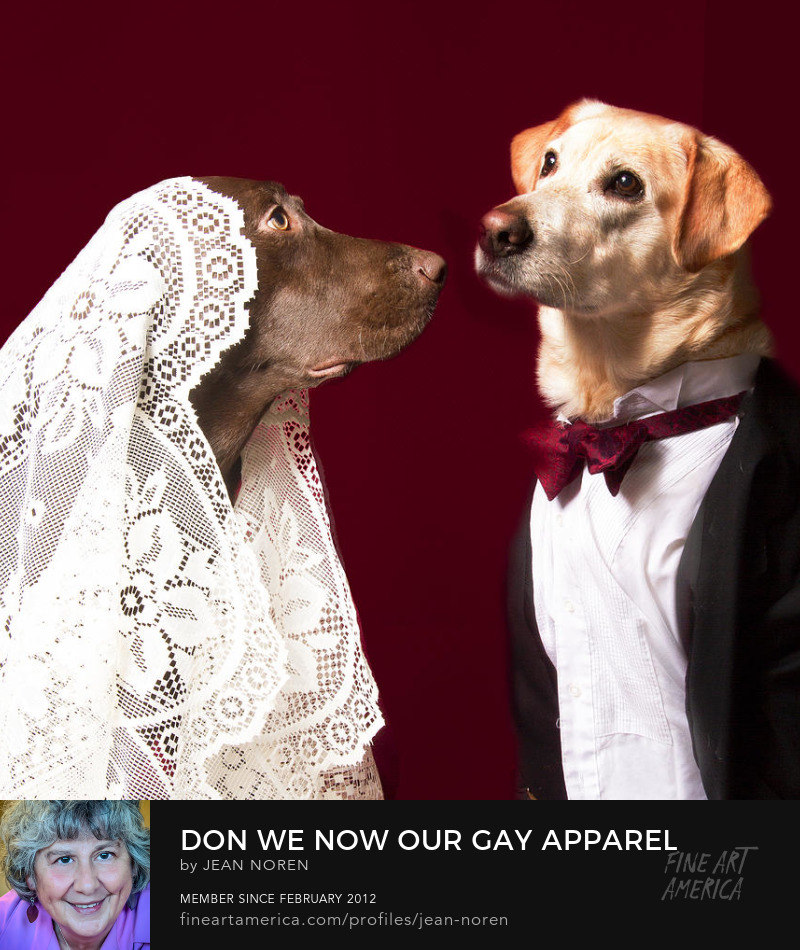Labrador dogs getting married photo by Jean Noren