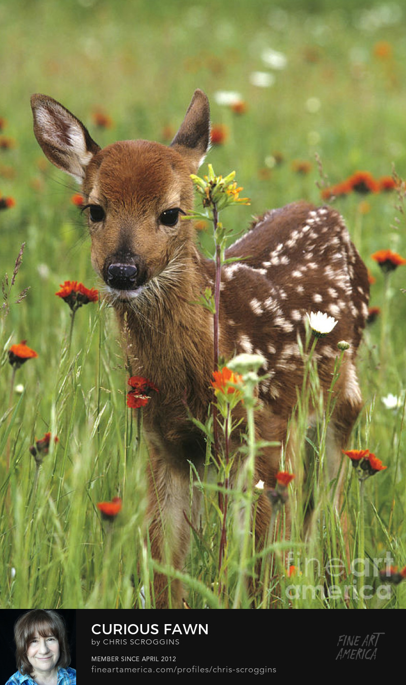 cute animals baby deer with flowers photo by chris scroggins