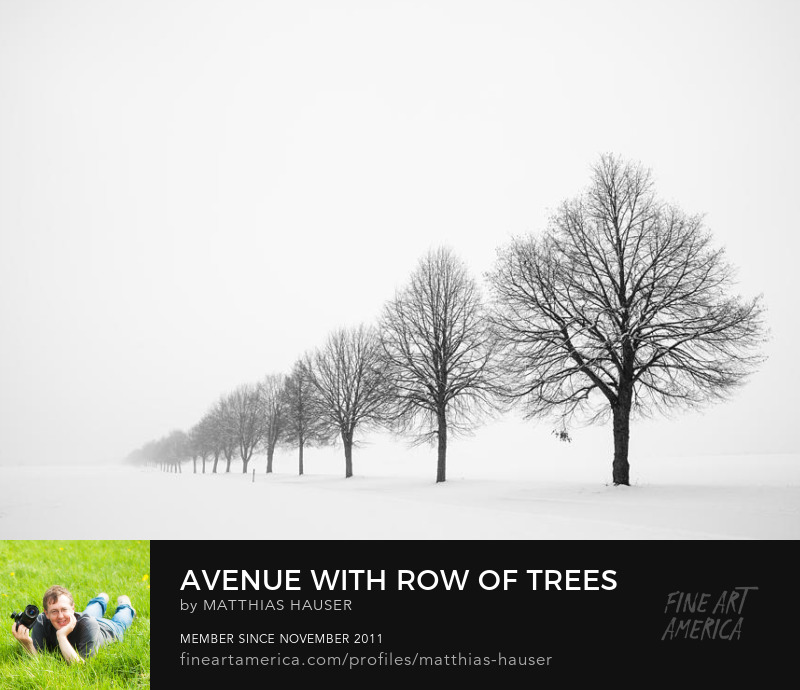 Trees in winter peaceful tranquil and minimalist Fine Art Photography by Matthias Hauser