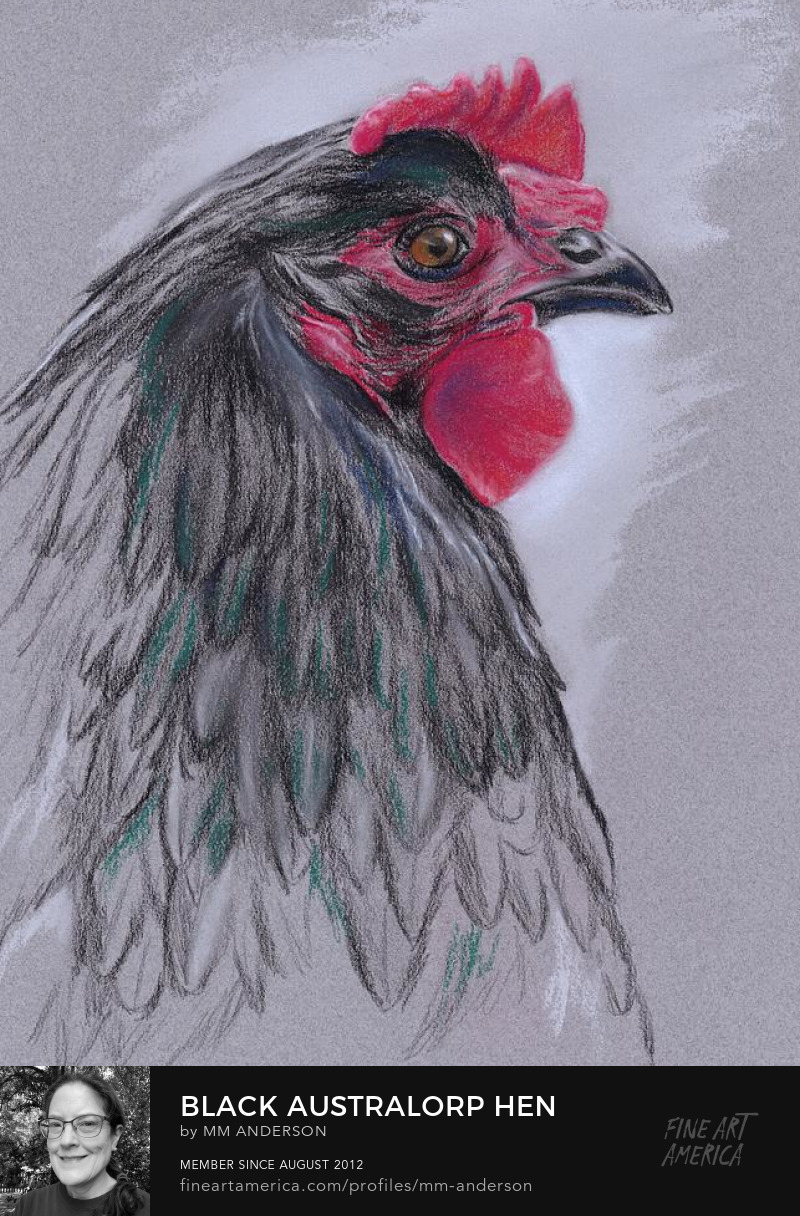 Black Australorp Hen pastel artwork by MM Anderson