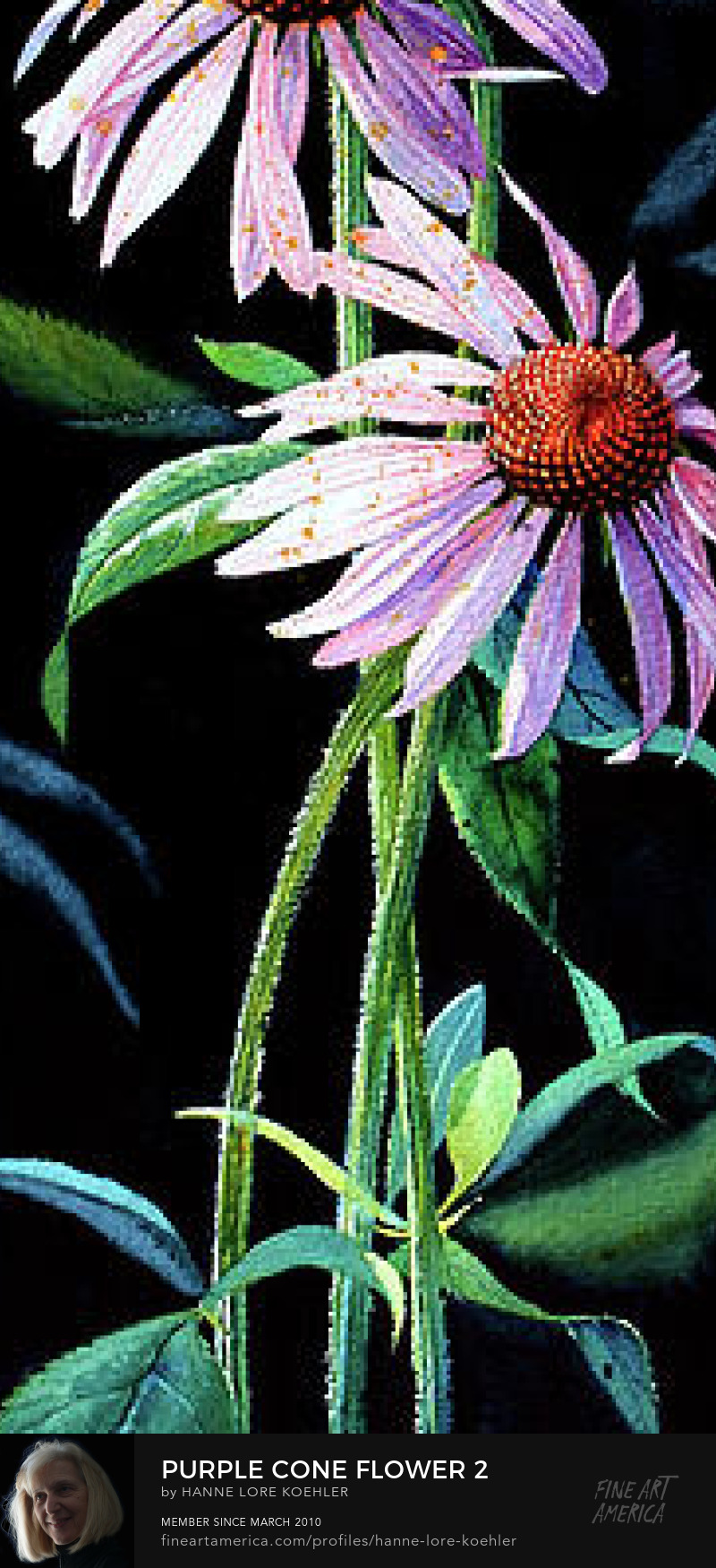 Purple Cone Flower Painting
