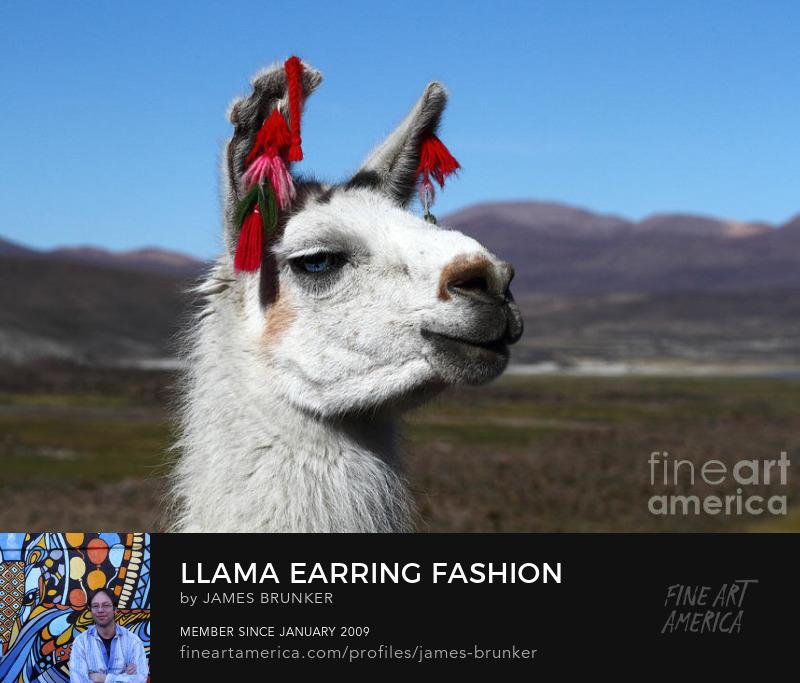 Llama Photo Prints