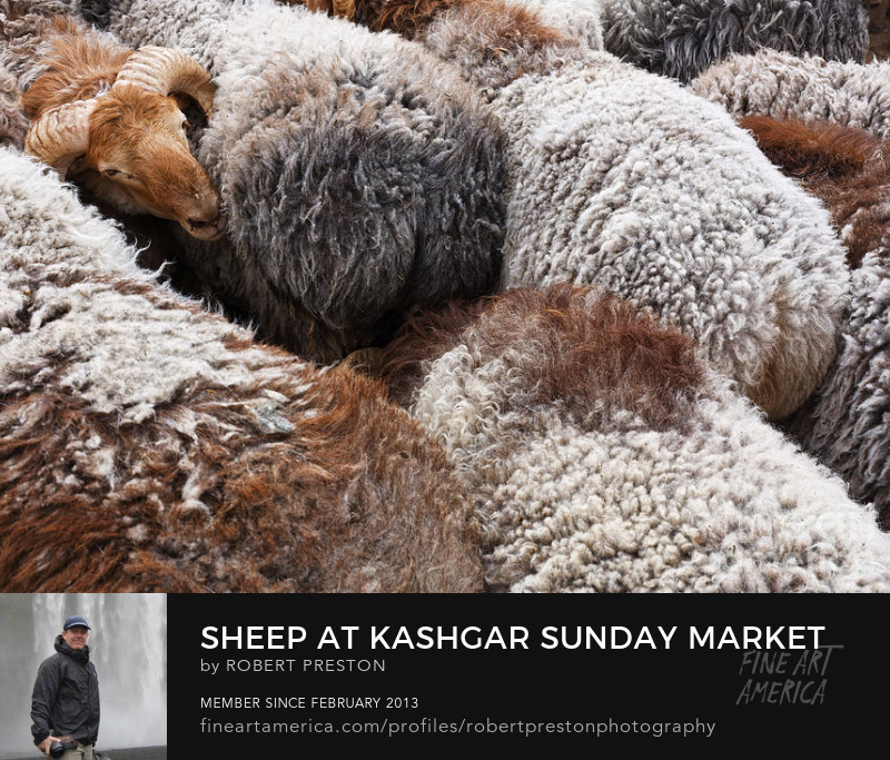 Sheep at Kashgar Sunday Market
