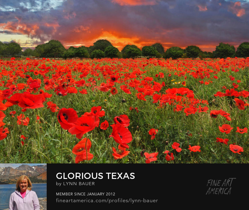 Glorious Texas Hill Country Wildflower Poppy Sunset by Lynn Bauer