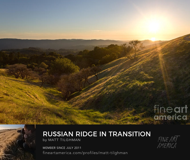 Russian Ridge Spring California Art Online