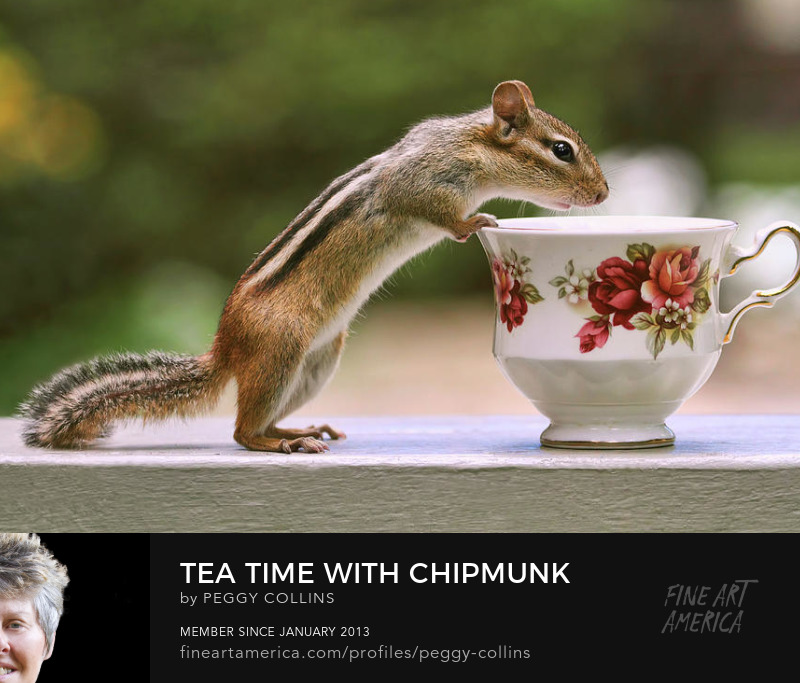 tea time with chipmunk photograph by peggy collins