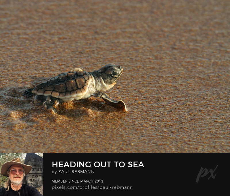 View online purchase options for Heading Out To Sea by Paul Rebmann