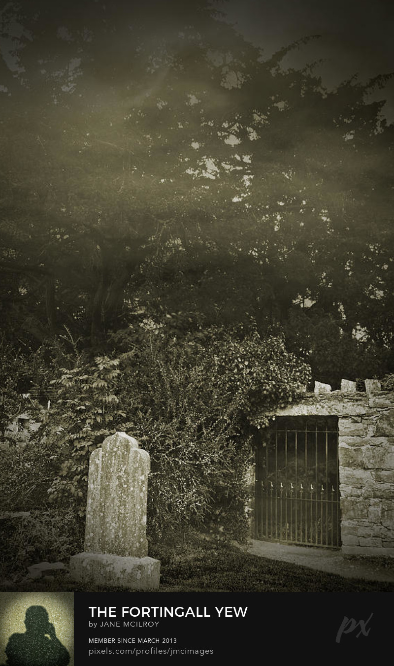 The Fortingall Yew by Jane McIlroy