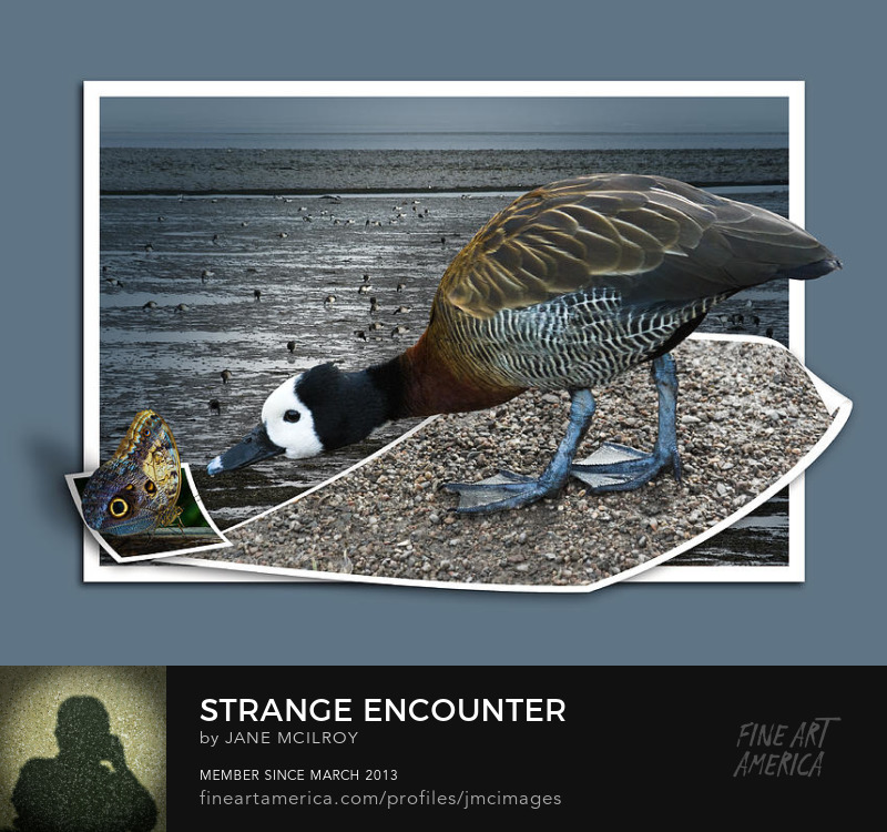 Strange Encounter by Jane McIlroy