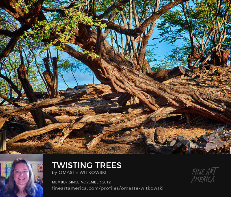 Twisting Trees Hawaii Art Prints