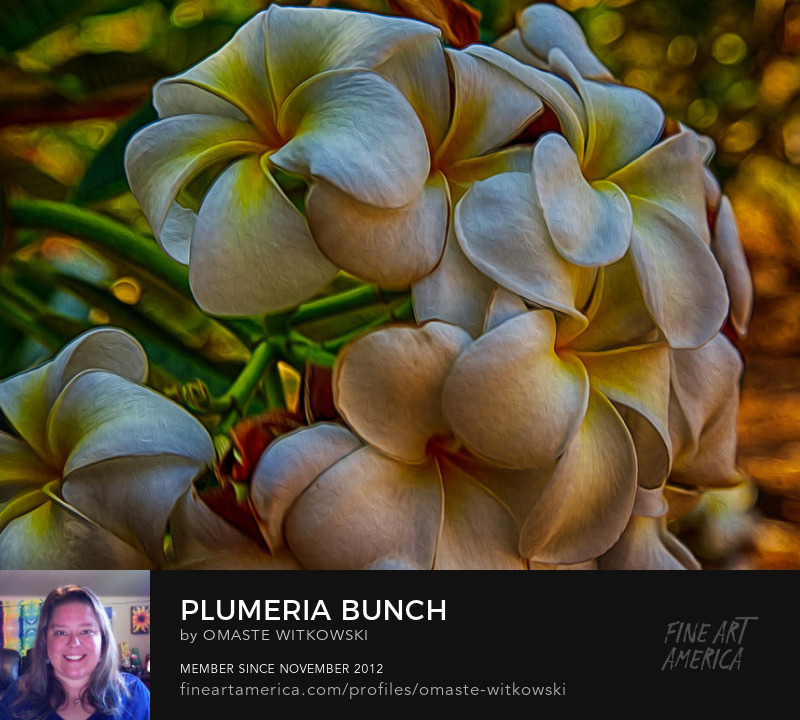 Plumeria Bunch Hawaii Photography Prints