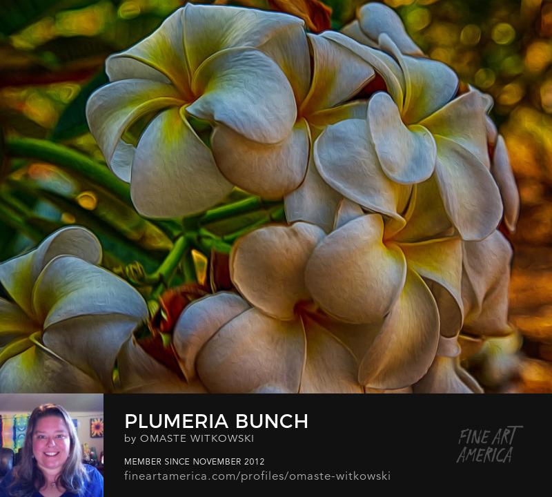 Plumeria Bunch Hawaii Photography Prints