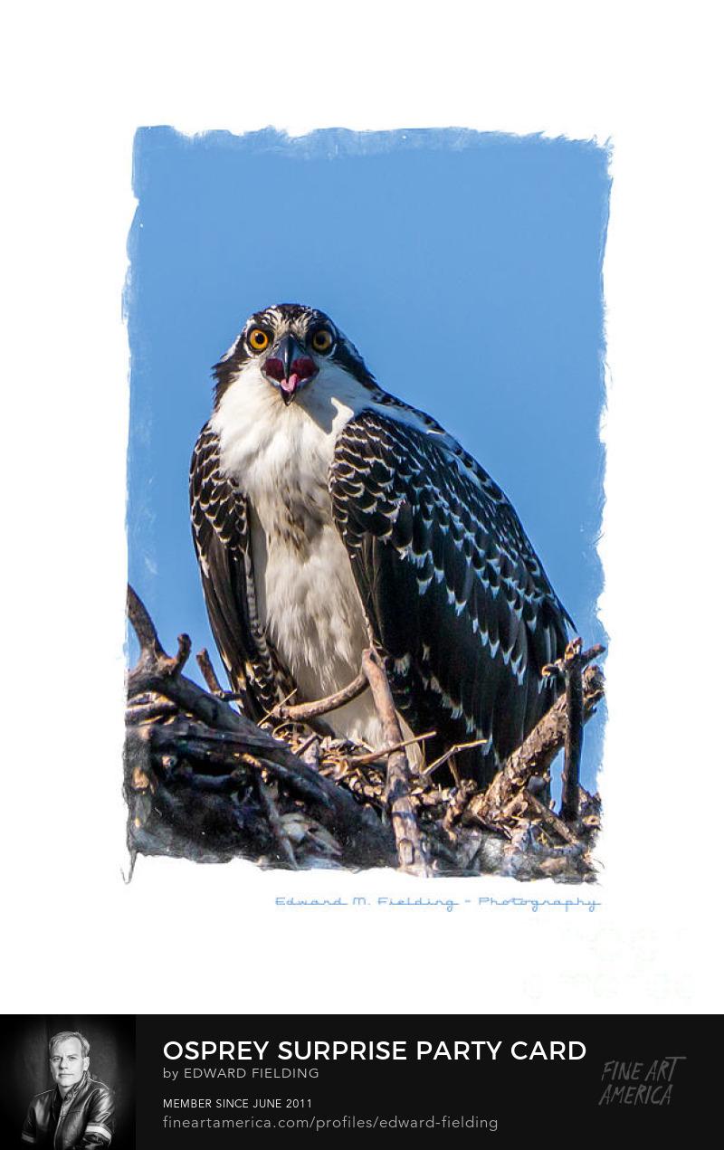 Osprey Art Online
