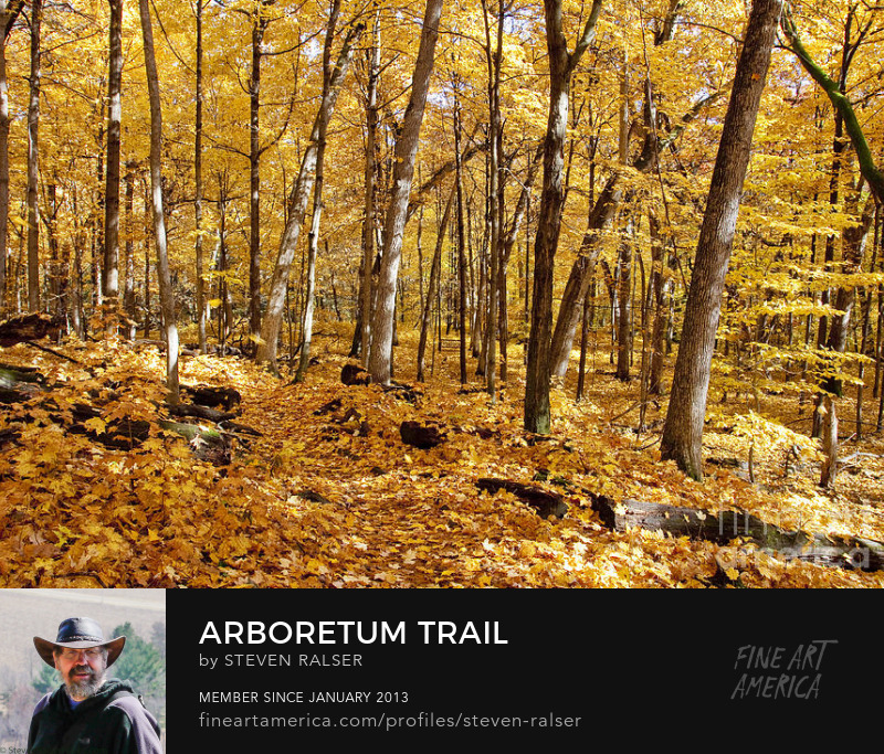 fall photo of a trail in a maple forest in the us arboretum, Madison, Wisconsin