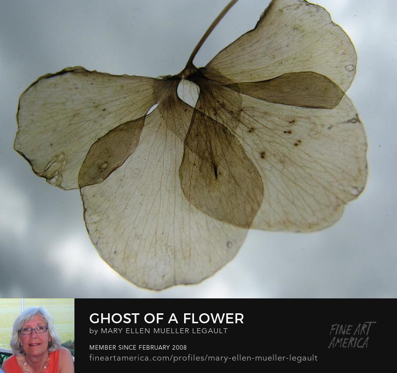 Ghost of a Flower