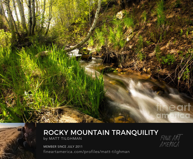 Rocky Mountain Forest Art Online