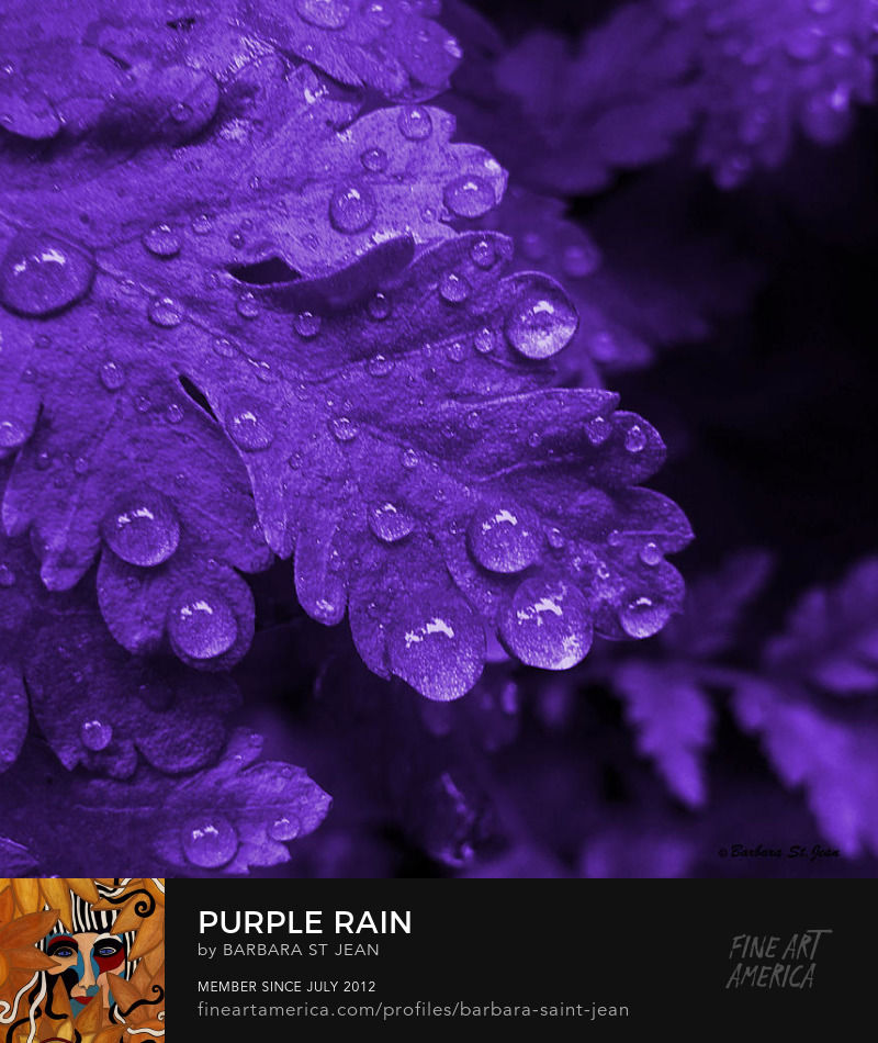 Purple Rain by Barbara St. Jean