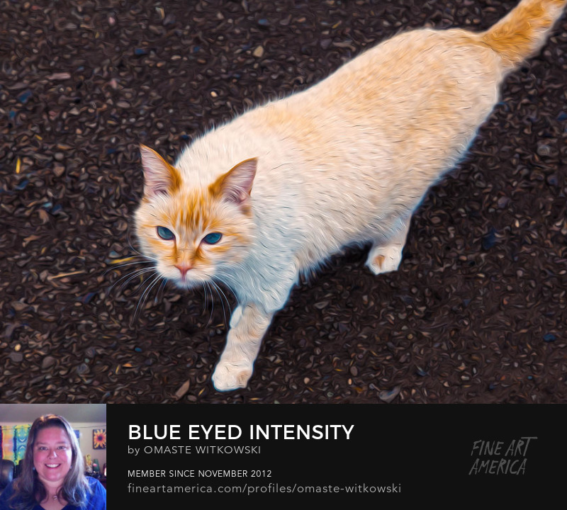 Blue Eyed Intensity Wildlife Photography Art Prints