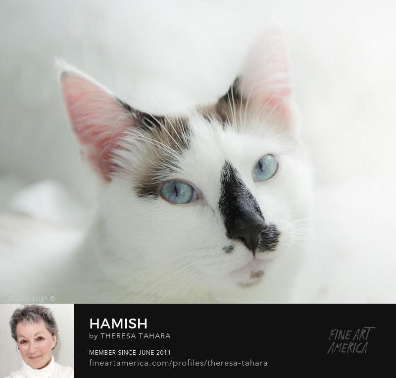 Hamish the cat taken by Theresa Leigh Photography