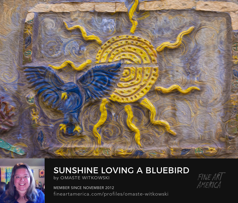 Sunshine Loving A Bluebird Windows Into The Wild Photography Prints