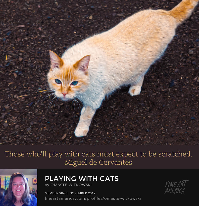 Playing With Cats Quotes To Enjoy Art Prints