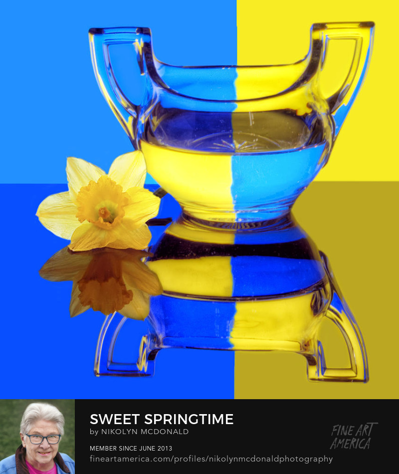blue yellow sugar bowl daffodil refraction photo by Nikolyn McDonald
