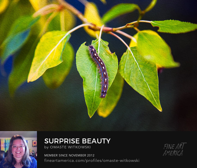 Surprise Beauty Wildlife Photography Prints