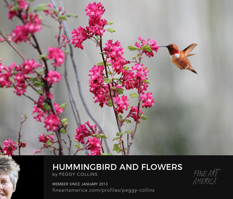 hummingbird and flowers photograph by peggy collins