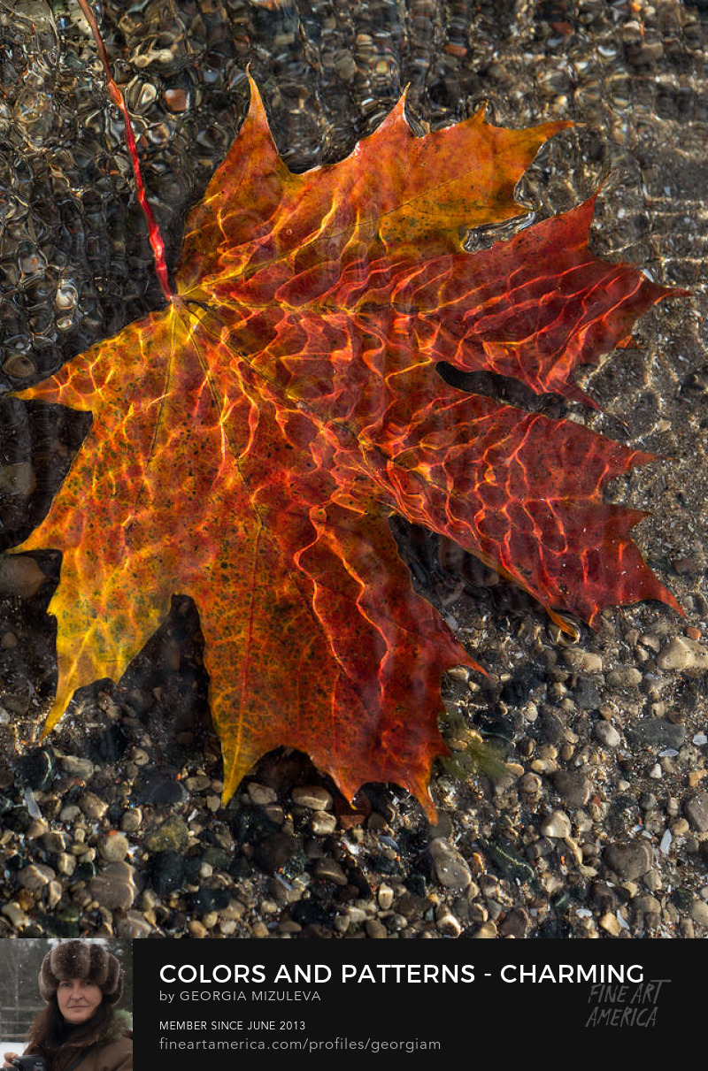 Colors And Patterns Charming Maple Leaf Photograph by Georgia Mizuleva