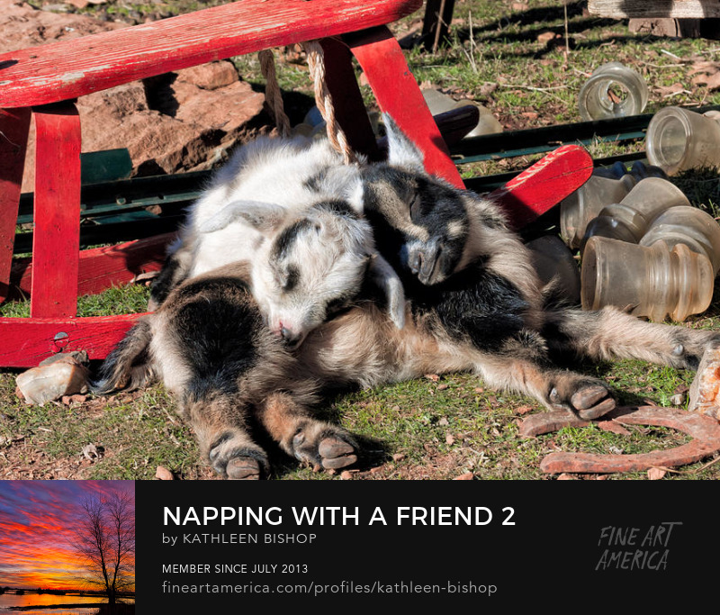 Napping With a Friend 2 by Kathleen Bishop Photography