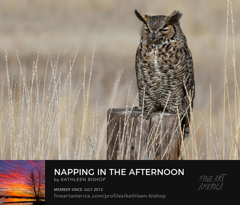 Napping in the Afternoon by Kathleen Bishop Photography