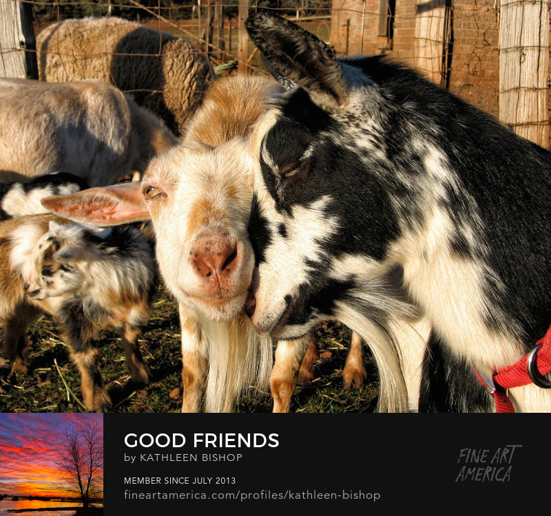 Good Friends by Kathleen Bishop Photography