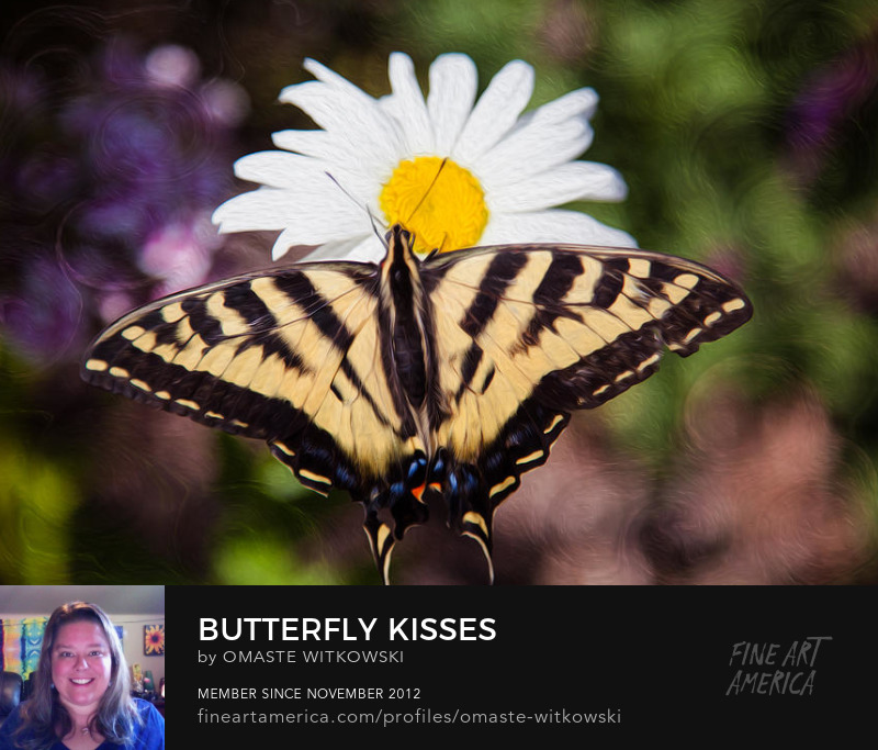 Butterfly Kisses Wildlife Photography Prints