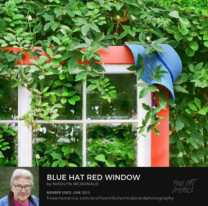 whimsical garden still life with red window frame and blue hat