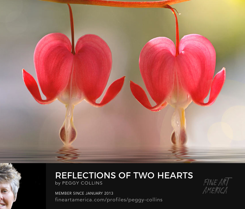 bleeding hearts by peggy collins