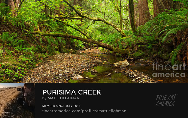 Purisima Creek California Art Prints