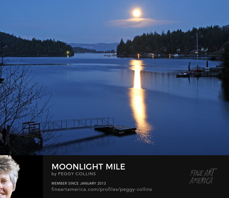 moonlight mile photograph by peggy collins