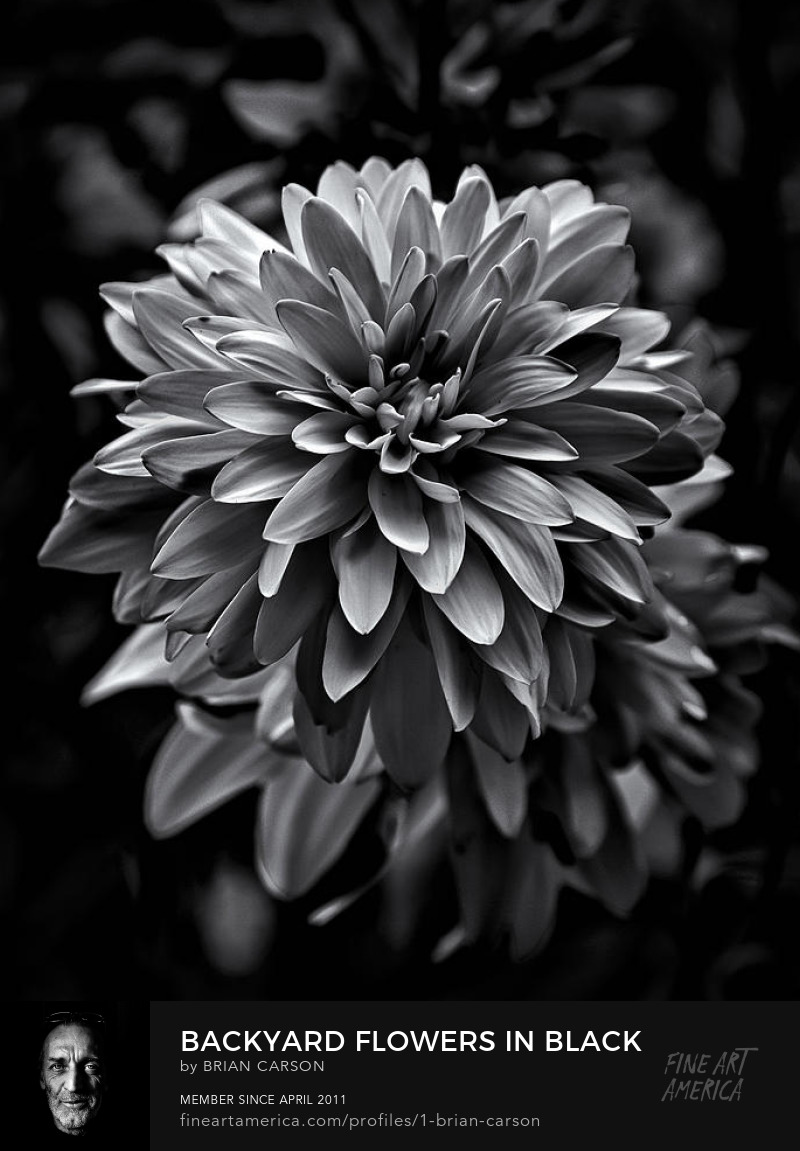 Backyard Flowers In Black And White 15