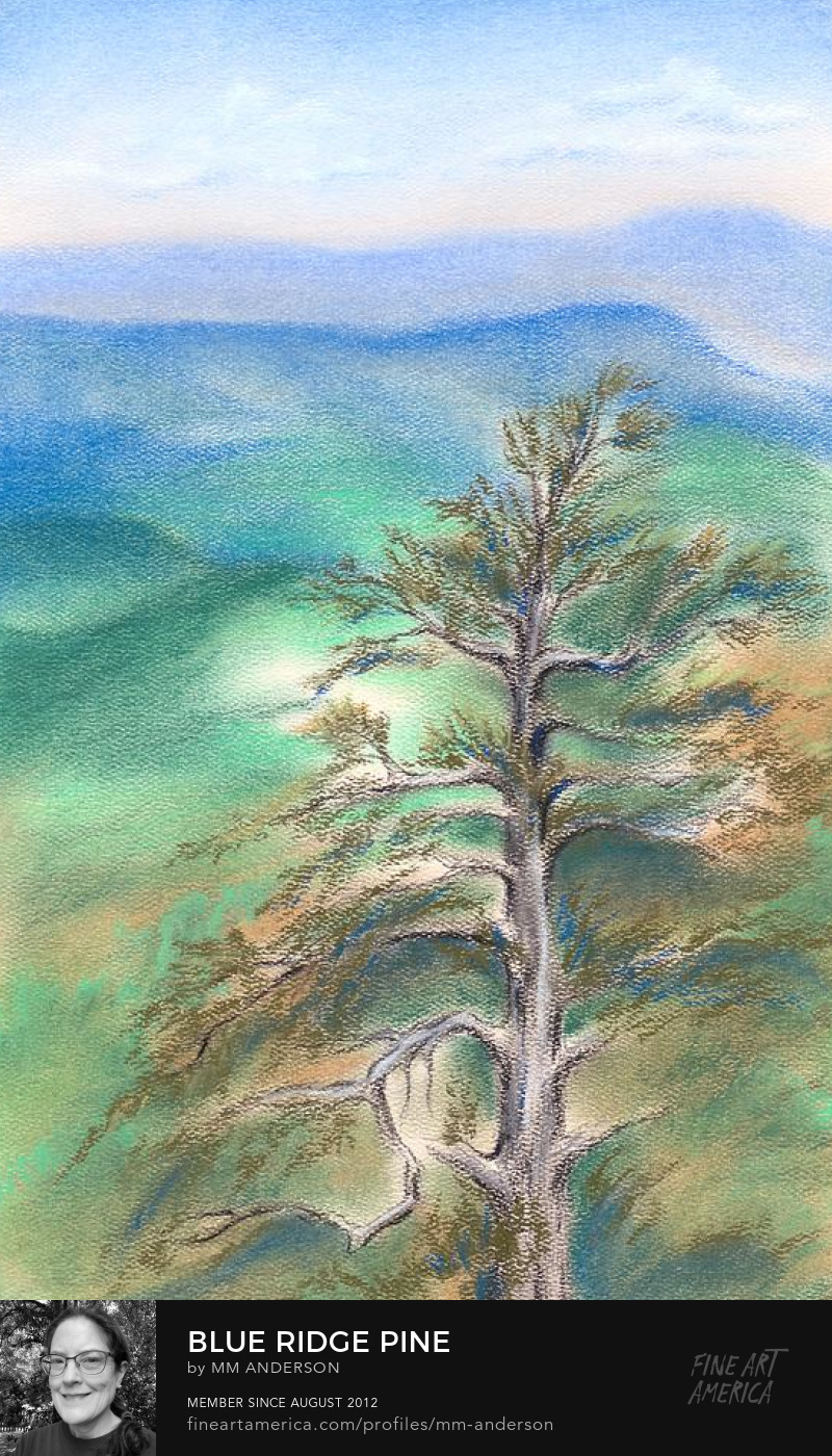 Blue Ridge Pine pastel artwork for sale by MM Anderson