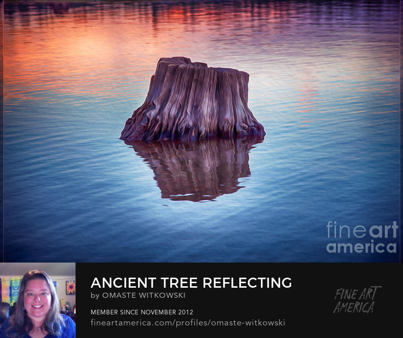 Ancient Tree Reflecting The Sunrise Abstract Photography Prints