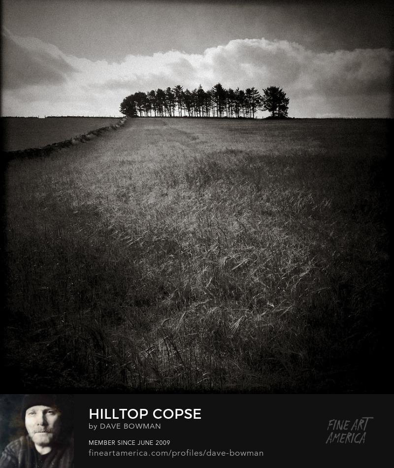 Hilltop Copse by Dave Bowman