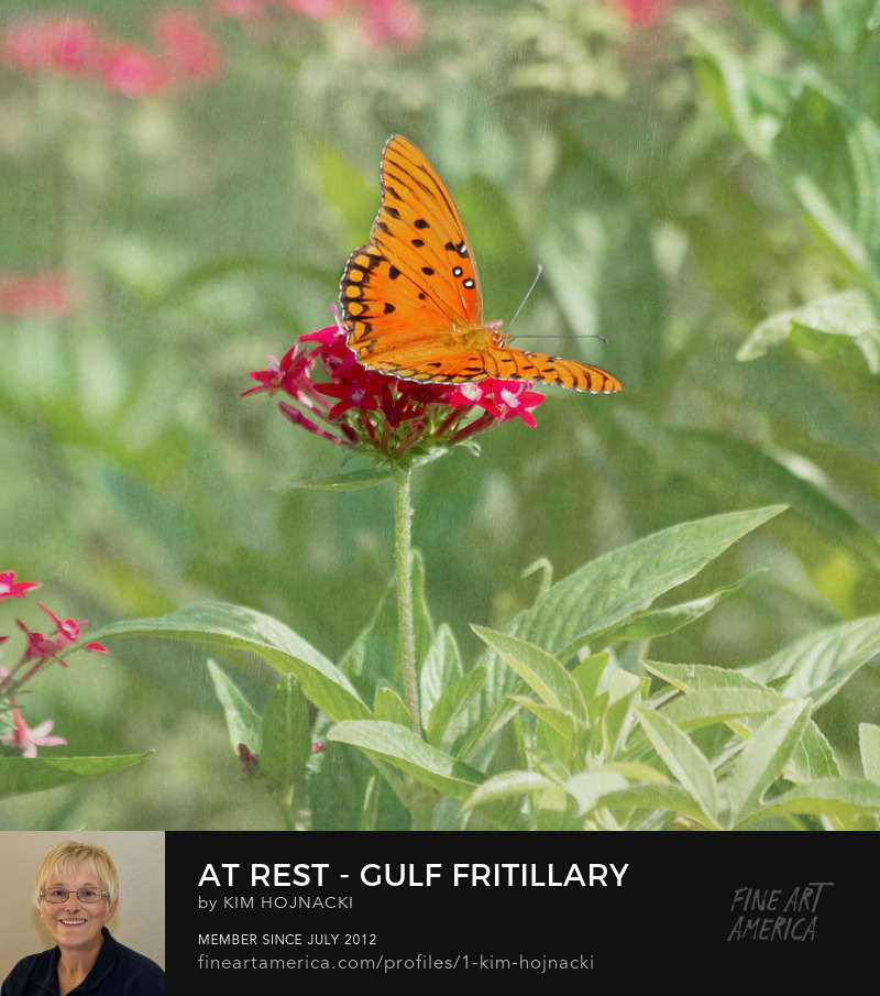At Rest-Gulf Fritillary Butterfly by Kim Hojnacki
