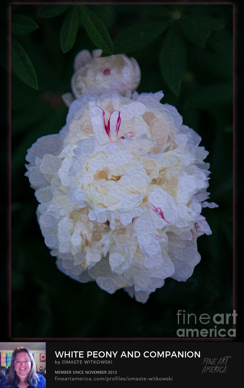 White Peony And Companion Abstract Flowers Art Prints
