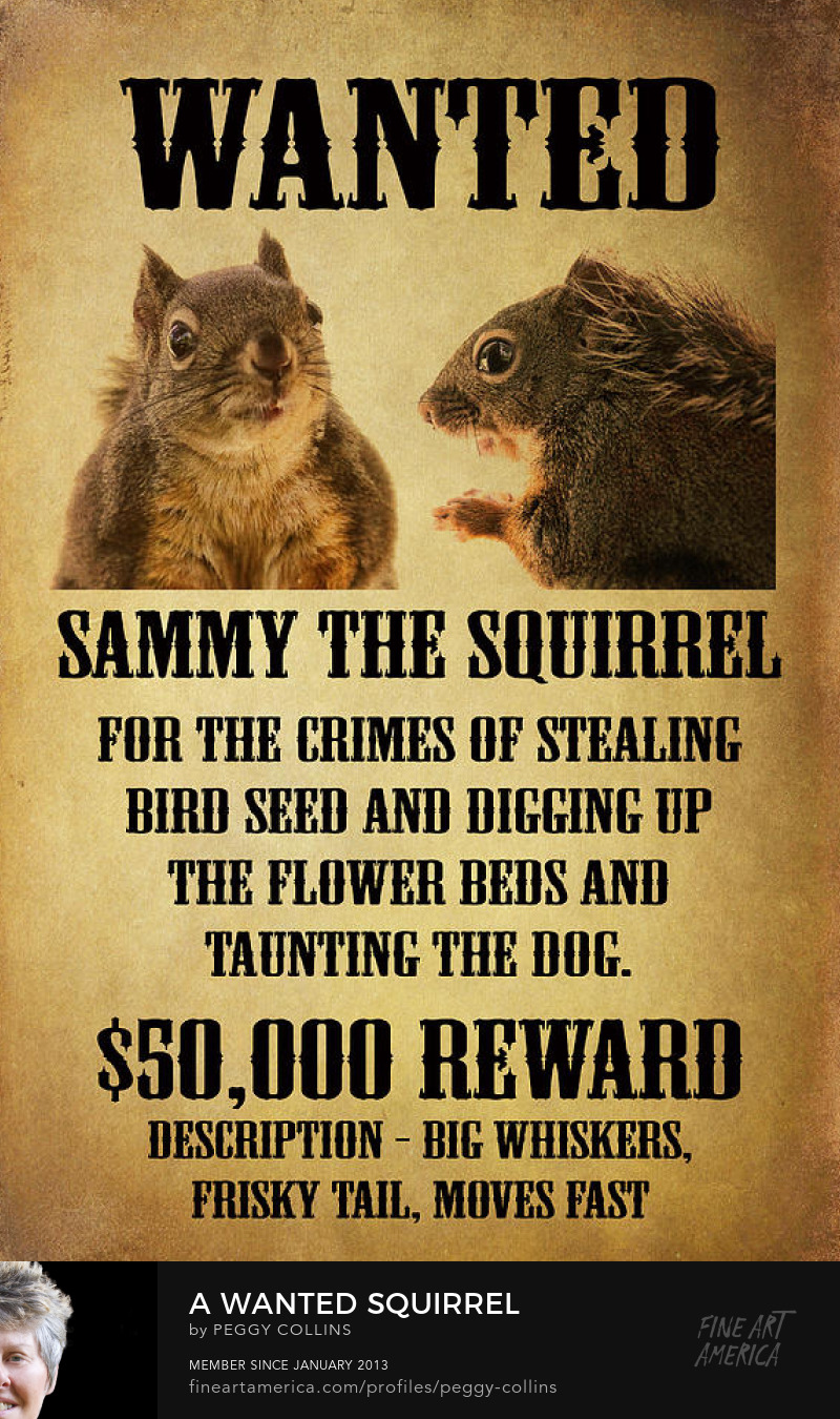 squirrel wanted poster by Peggy Collins