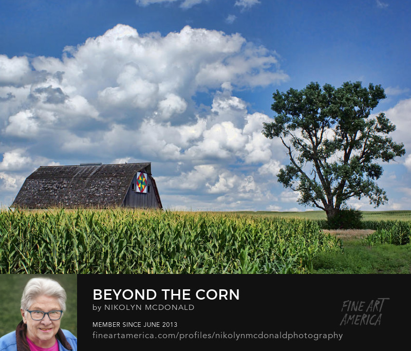 Iowa quilt barn in corn field photo by Nikolyn McDonald