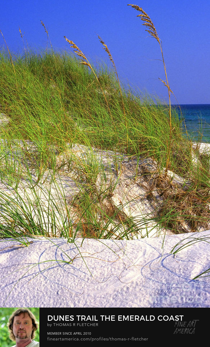 Photography Prints sand dune Florida beach Gulf of Mexico