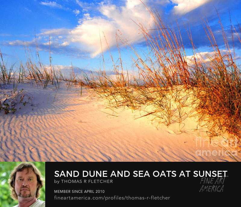 Photography Prints Gulf Shores sand dune sea Oats
