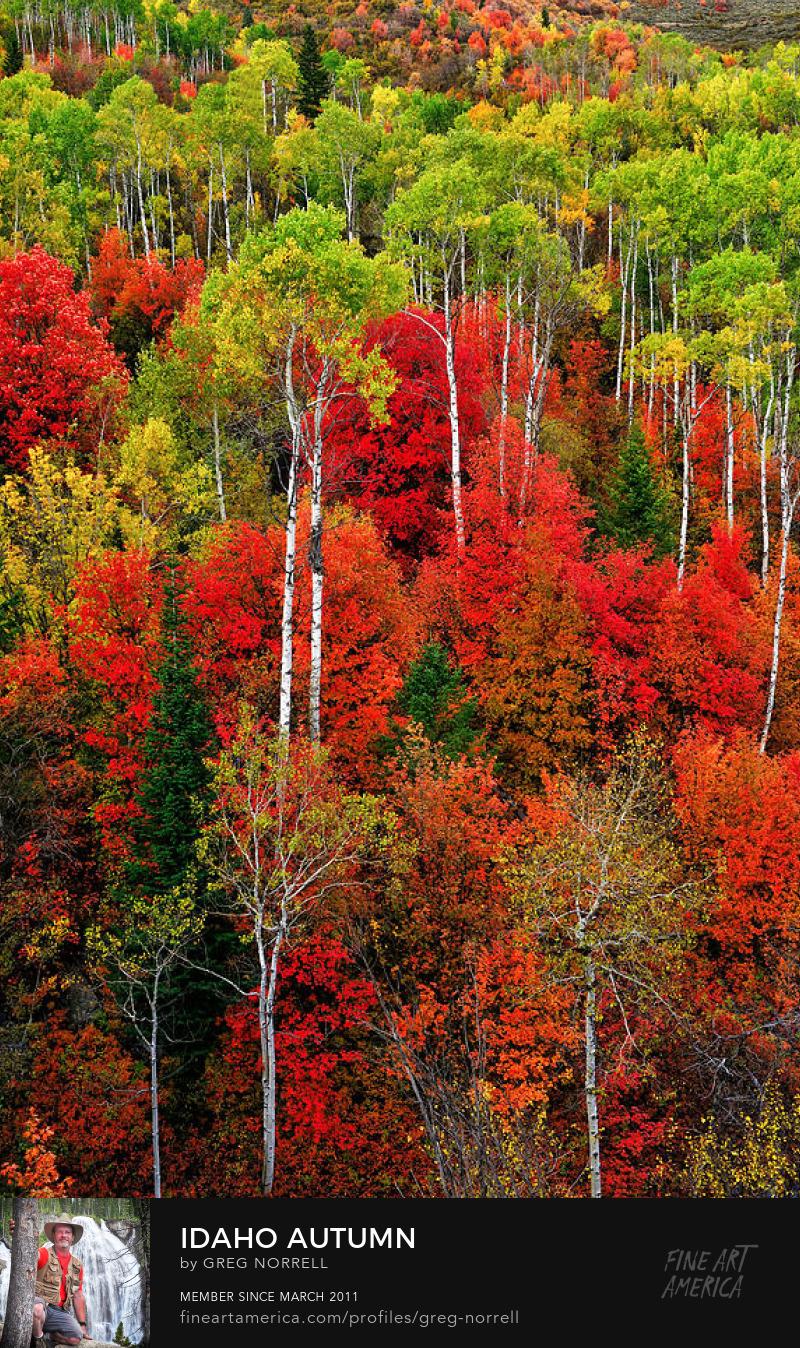 Idaho Autumn Limited Time Promotion