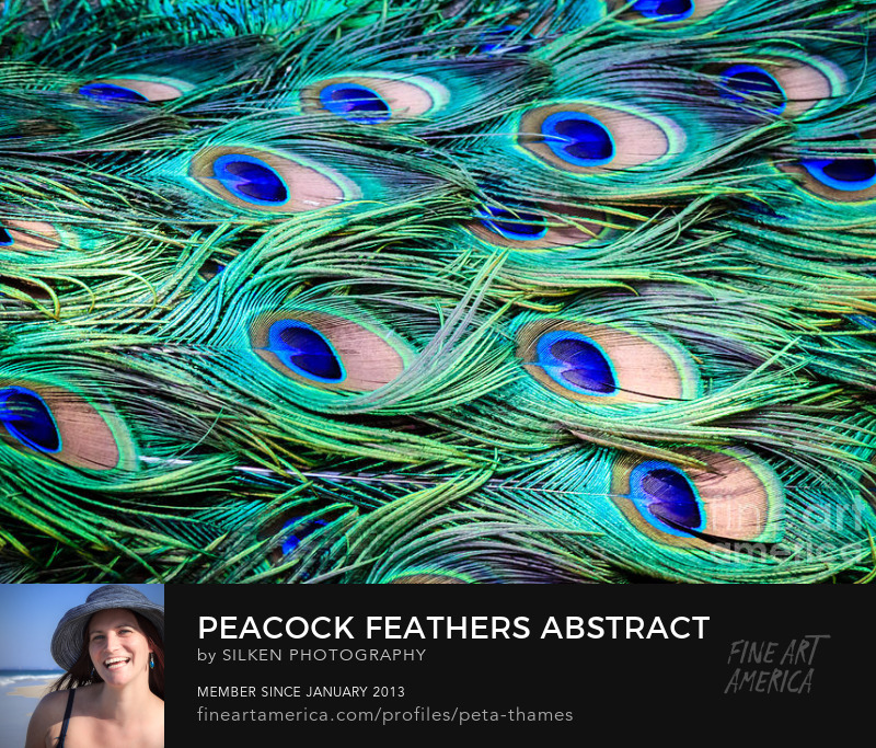 Peacock Feathers Abstract by Peta Thames