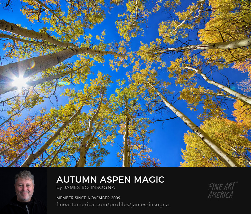 Aspen Magic Autumn Season Photography Prints